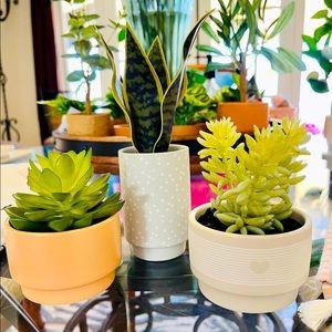 HostPick🥳 Set of 3 Potted Faux Succulents